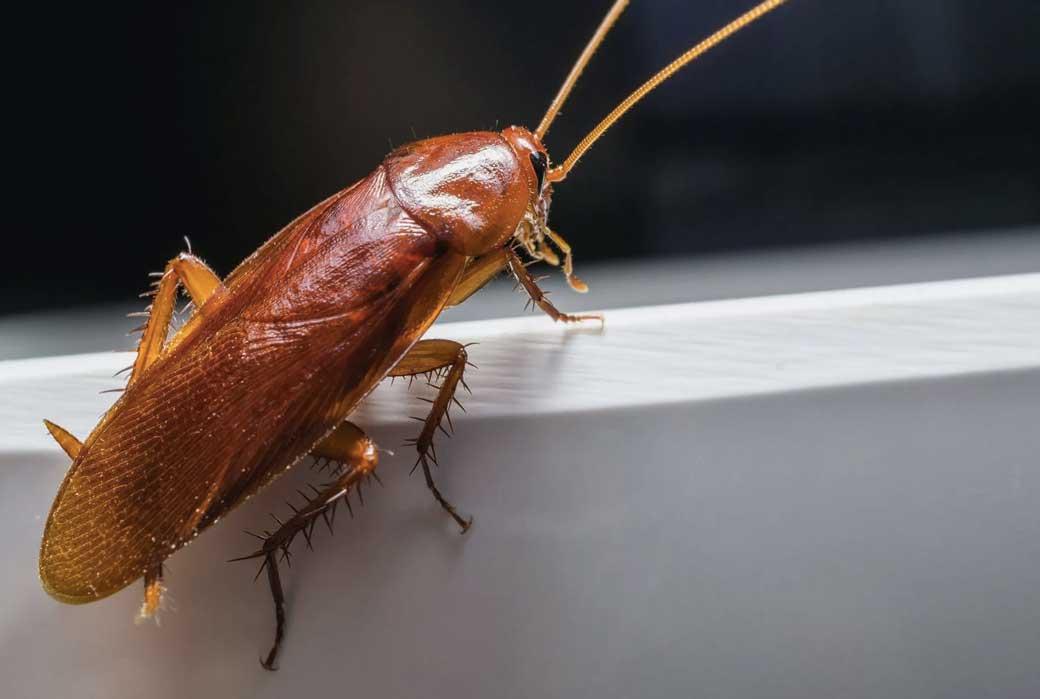 одновременно фото домовых тараканов трубы это